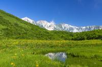 長野県 ニッコウキスゲ咲く鎌池湿原と白馬三山