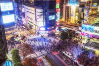 日本 東京都 夜の渋谷交差点