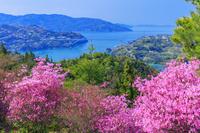 愛媛県 ミツバツツジ咲く開山公園より瀬戸内海の島々