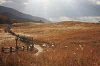 奈良県 ススキ揺れる曽爾高原