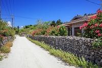 沖縄県 ブーゲンビレアと民家集落 竹富島