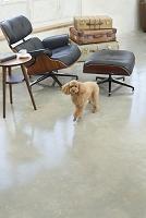 犬と海外風のリビング
