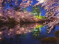 新潟県 高田城と桜