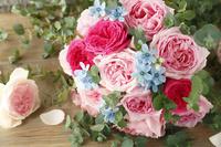 ピンクバラとブルースター