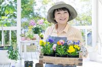 木箱のパンジーを持った笑顔の日本人のシニア女性