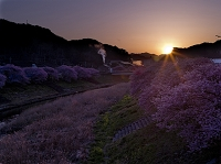 南伊豆の夕日と桜
