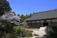 静岡県 桜咲く龍潭寺