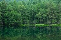 長野県 緑の御射鹿池