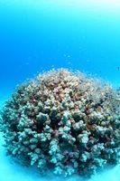 ミクロネシア連邦 チューク ジープ島近海