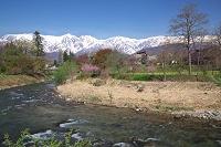 長野県 大出公園より姫川と北アルプス