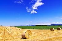 北海道 小麦のロールが転がる丘