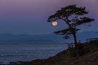 神奈川県 秋谷立石の松と月