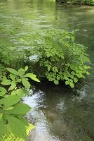 奥入瀬 渓流
