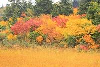 青森県 睡蓮沼畔の紅葉