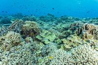 フィリピン トゥバタハリーフ サンゴ礁のイメージ