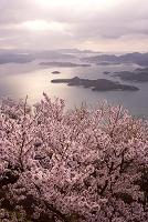 桜と瀬戸内海 竜王山より望む  朝