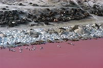 セネガル レトバ湖