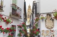 スペイン コルドバ 花の小径