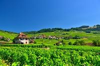スイス レマン湖の葡萄畑の建物