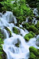 福島県 新緑のブナ坂の清水