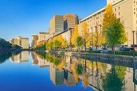 東京都 紅葉の銀杏並木と丸の内ビル群