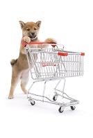 買い物かごを押しながら柴犬 正面
