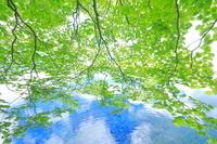 秋田県 湖畔の若葉・十和田湖