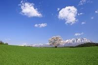 岩手県 岩手山と一本桜