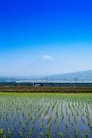 静岡県 東海道新幹線のぞみ