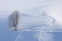 スイス タイヤの跡と一本の木