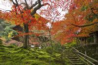 滋賀県 西明寺 三重塔と鐘楼