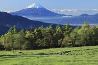 山梨県 北杜市 大泉町 八ヶ岳牧場 富士山と新緑の山並み