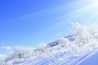 長野県 霧ヶ峰高原 霧氷の雪原