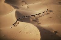モロッコ サハラ砂漠を進むラクダ