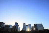 東京都 丸の内の高層ビル群に反射する朝日
