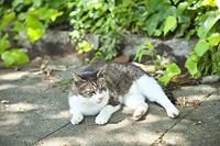 神奈川県 相模原麻溝公園の野良猫