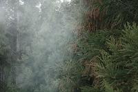 和歌山県 飛散するスギ花粉