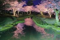 石川県 兼六園のライトアップ