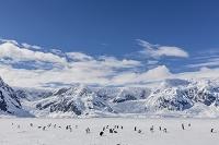 南極大陸 ジェンツーペンギンの群れ