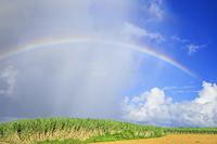 沖縄県 虹とスコール