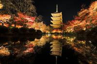 京都府 東寺 ライトアップされた五重の塔と瓢箪池の紅葉
