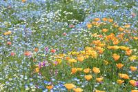 花壇の花畑