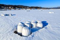 広島県 雪原に点在する稲わらロール