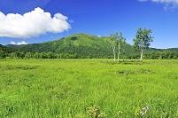 群馬県 尾瀬 上田代の木道より望む至仏山と白樺