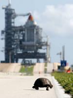 スペースシャトルディスカバリーに向かって歩くカメ