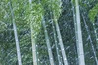 東京都 竹林