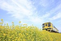 千葉県 いすみ鉄道 菜の花列車