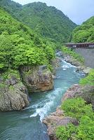 山形県 小国町 小雨の赤芝峡