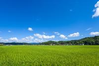 島根県 稲田と田園