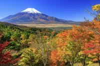 山梨県 紅葉の二十曲峠より富士山